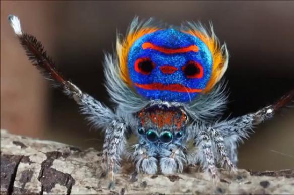 Австралийский исследователь обнаружил неизвестных науке пауков. 400311.jpeg
