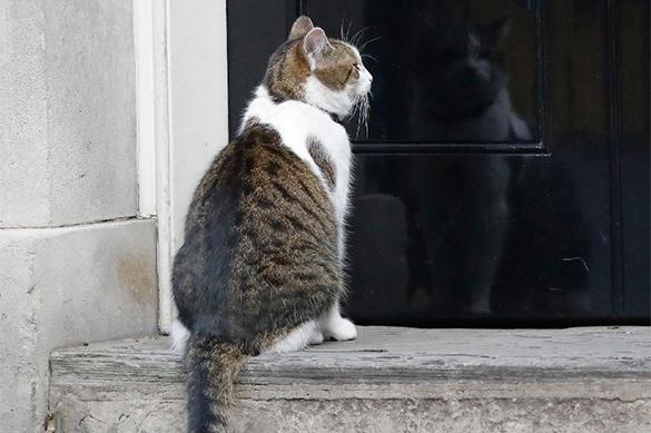 Правительство Великобритании готовится к увольнению кота