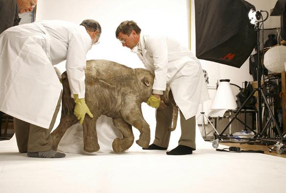 Ученые приблизились к клонированию мамонта. Ученые приблизились к клонированию мамонта