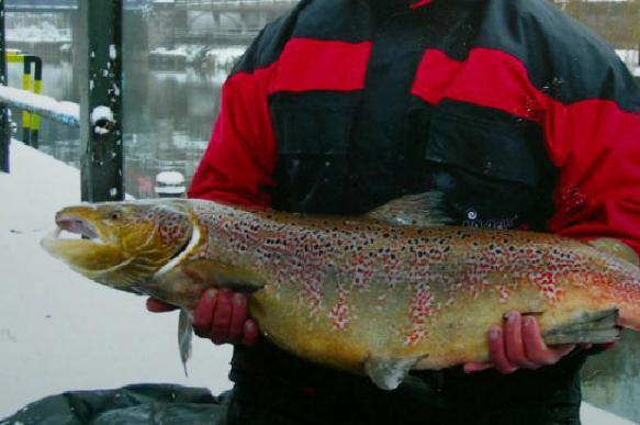 Инвестиционные квоты на вылов рыбы одобрены в первом чтении