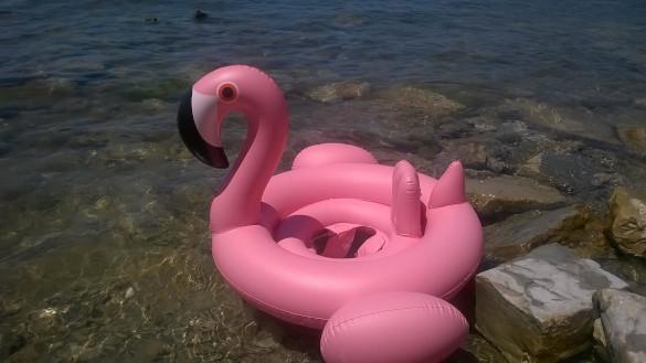 Как выжить в Анапе. фламинго