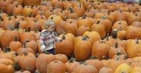 В Калифорнии прошел мировой чемпионат среди тыкв. pumpkin