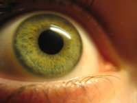 Ученые вырастили клетки человеческого глаза на крыле цикады. 282320.jpeg