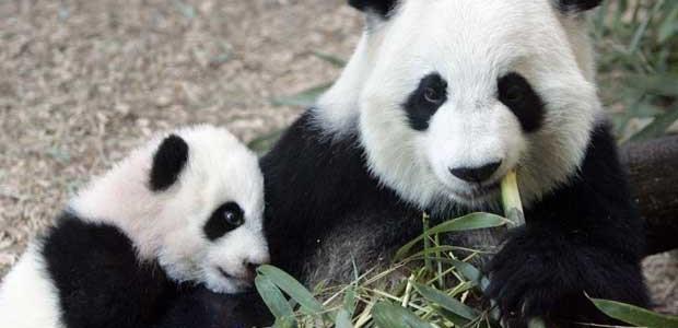 Экскурсоводами в Московском зоопарке станут российские знаменитости. 303321.jpeg