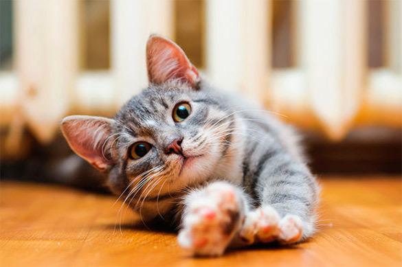 Ученые: кошки предпочитают еде общение