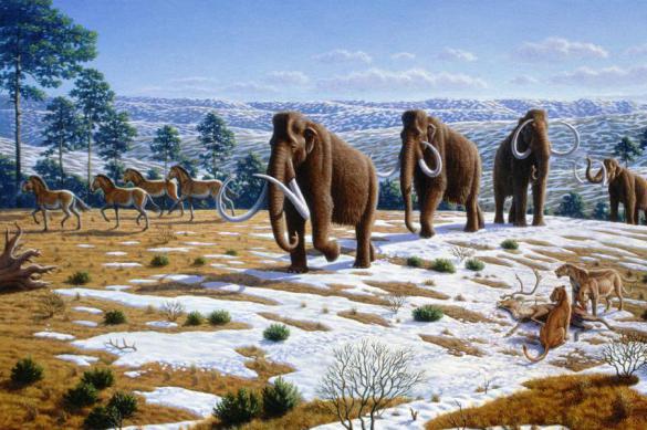 В ребре  якутского мамонта найдено копье с особыми пазами возрастом 12000 лет. В ребре якутского мамонта найдено копье с особыми пазами возраст