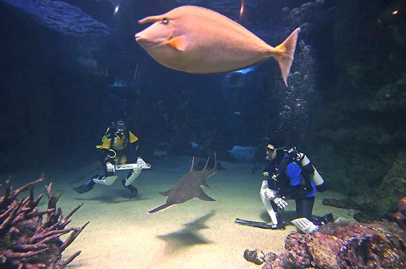 Девушки поддержали чемпионат игрой в крикет в Сиднейском аквариуме. Игра в крикет в Сиднейском аквариуме