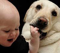 Младенцы и собаки говорят на одном языке