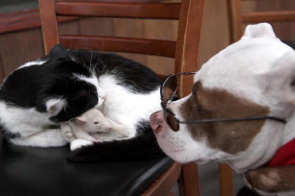 Названы самые популярные в России клички кошек собак.
