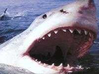Кровожадная акула напала на французскую туристку