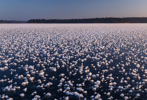 На льду Валдая распустились цветы. 396330.jpeg
