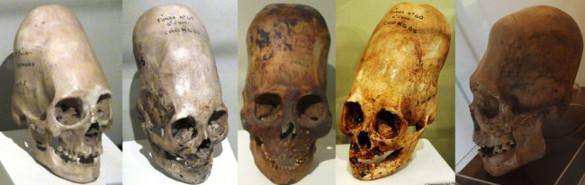 ДНК черепов Паракаса шокировала ученых. ДНК черепов Паракаса шокировала ученых, черепа Паракаса