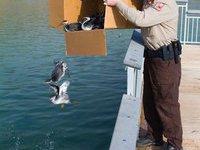 В США из-за собственной неосторожности тысячами гибнут птицы. 251332.jpeg