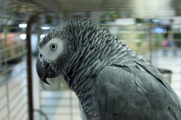 Жако: особенный попугай с человеческой душой. 397336.jpeg