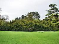 Дерево с самой большой кроной в Европе растет в Великобритании