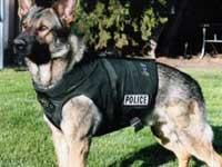 Полицейская собака сбежала с
