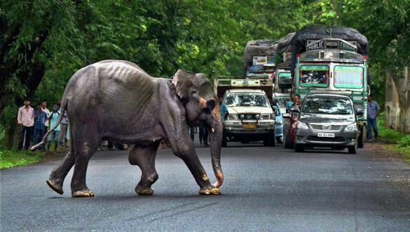Нападение слона на туристов в Индии. 394341.jpeg
