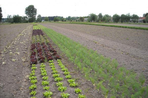 Кислотность почвы: почему она важна и как ее определить. 395341.jpeg