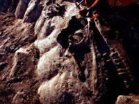 Известный палеонтолог угодил в тюрьму за кражу останков