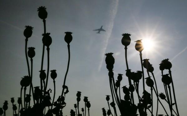 В России могут разрешить выращивать мак на лекарства
