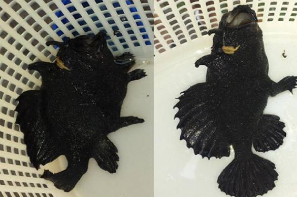 В Австралии поймали рыбу с ногами. 381346.jpeg