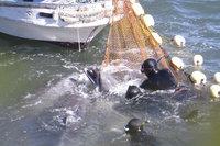 Японский премьер назвал охоту на дельфинов частью национальной культуры. 288348.jpeg