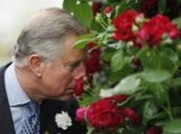 Для принца Чарльза выведен новый сорт красной розы