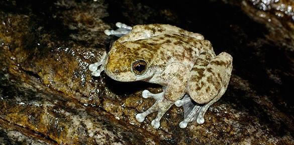 В Приморье задержаны три китайских туриста за браконьерскую ловлю лягушек в парке. 303354.jpeg