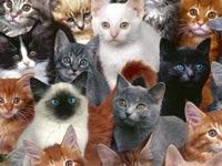 Кошки из шведского приюта получили в наследство 300 тыс. евро