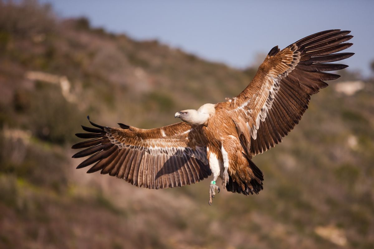 Летят птицы над Кавказом. 404355.jpeg