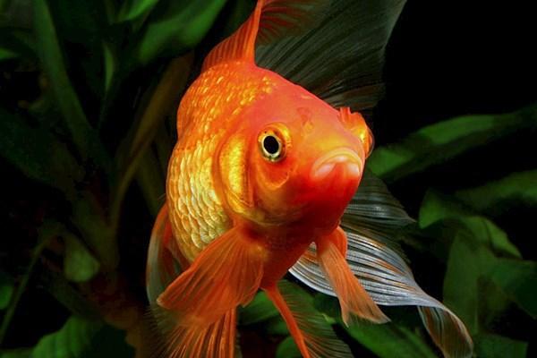 Как ухаживать за аквариумом и рыбками. 393358.jpeg