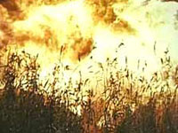 В Афганистане устроили показательную акцию по сожжению более 6