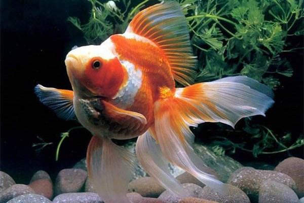 Откуда берутся рыбки в наших аквариумах?. 393359.jpeg