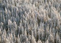 На Камчатке пропала семья на снегоходах. 278360.jpeg