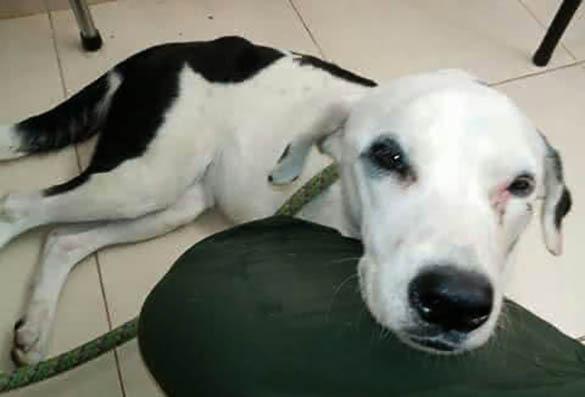 Брошенная в аэропорту собака умерла от тоски по хозяевам. 379362.jpeg