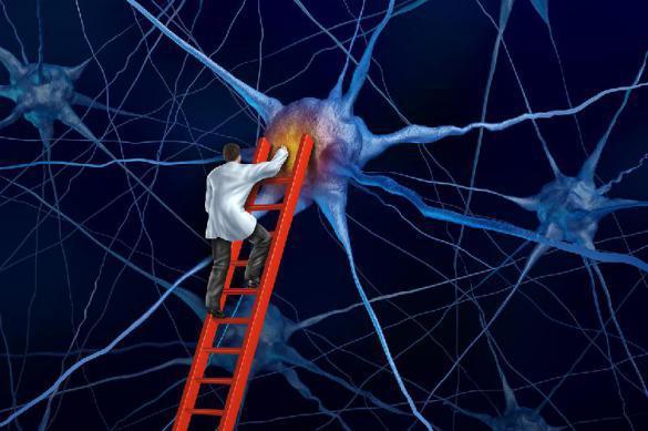 Ученые назвали простой способ улучшить память. 392362.jpeg