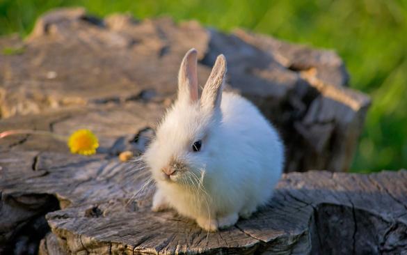 Как вырастить здорового кролика?. 394363.jpeg