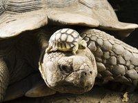 черепахи. 260364.jpeg