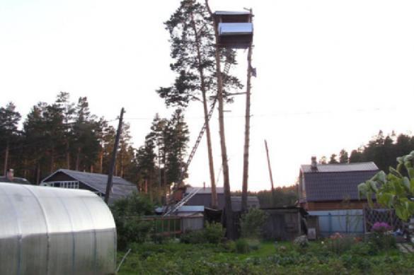 Пенсионер построил дачу на соснах соседей и ждет Путина. 391366.jpeg