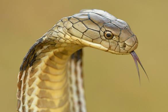 Гадюки проснулись: как на майские не пострадать от укусов змей
