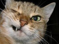 Кот пытался пронести в тюрьму мобильник. 236374.jpeg