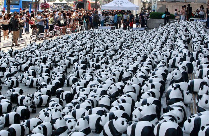 В Гонконг приехали путешествующие панды. 1600 панд