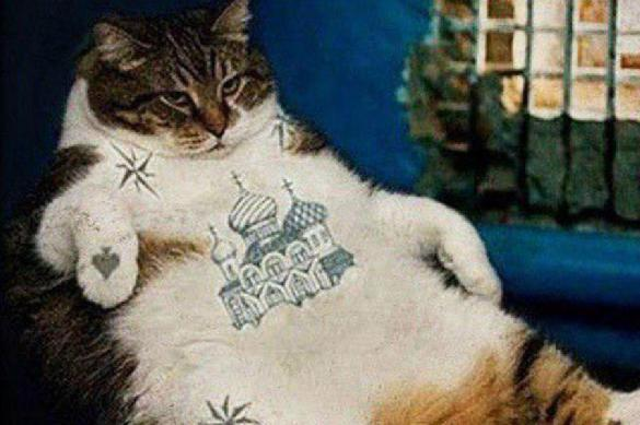 В ошейнике тюремного кота ФСИН найдена наркота. 390378.jpeg