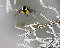 Весна в Москве начнется снегом