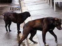 Убийцы бродячих собак в Москве получили условные сроки