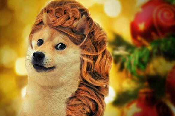 Хвост трубой: Желтая Собака диктует моду на прически. Хвост трубой 1