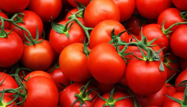 Голландцы обкидали друг  друга помидорами в знак протеста против эмбарго. 298382.png