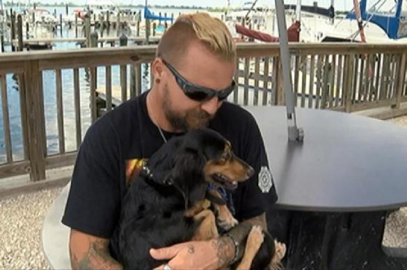 Собака плыла навстречу хозяину пять километров в шторм. 391384.jpeg