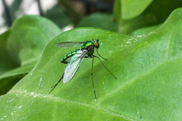 Таганрог оправдывается за миллионы огромных комаров. 391385.jpeg