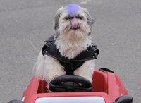 Собака воссоединилась с хозяином через 7 лет после пропажи. dog